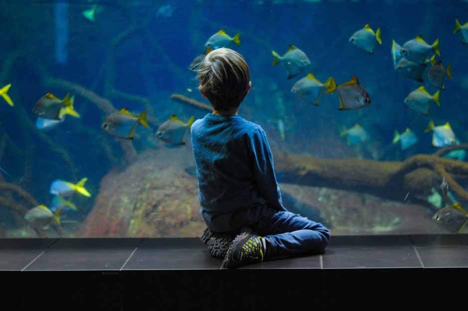 Lodon Aquarium: how to get there