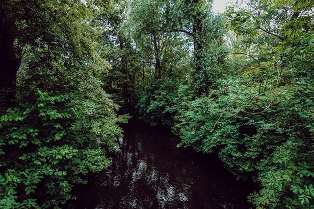 Vondelpark: view